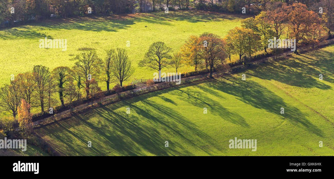 Herbstliche Bäume und Schatten in der Nähe von Keswick, Lake District, Cumbria, England. Herbst (November) Stockbild