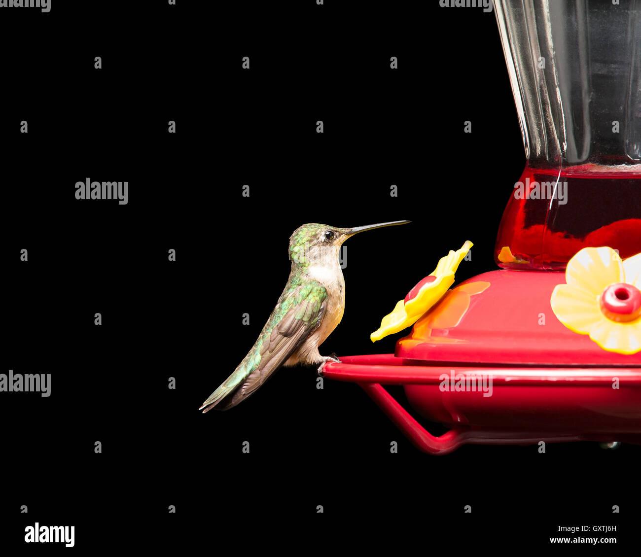 Großartig Süsse Kolibri Malvorlagen Ideen - Entry Level Resume ...