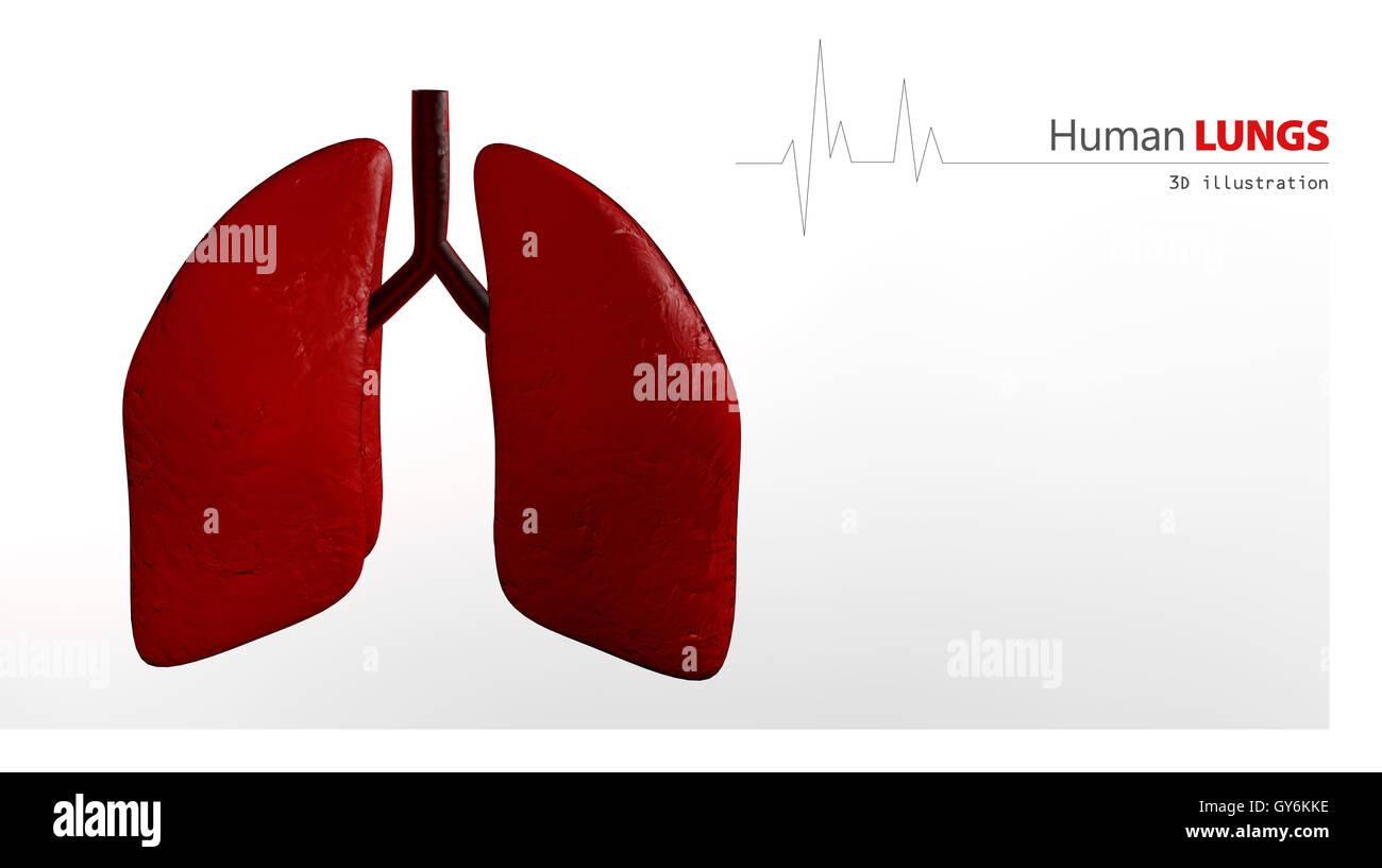 Anatomie der menschlichen Lunge Stockfoto, Bild: 120005074 - Alamy