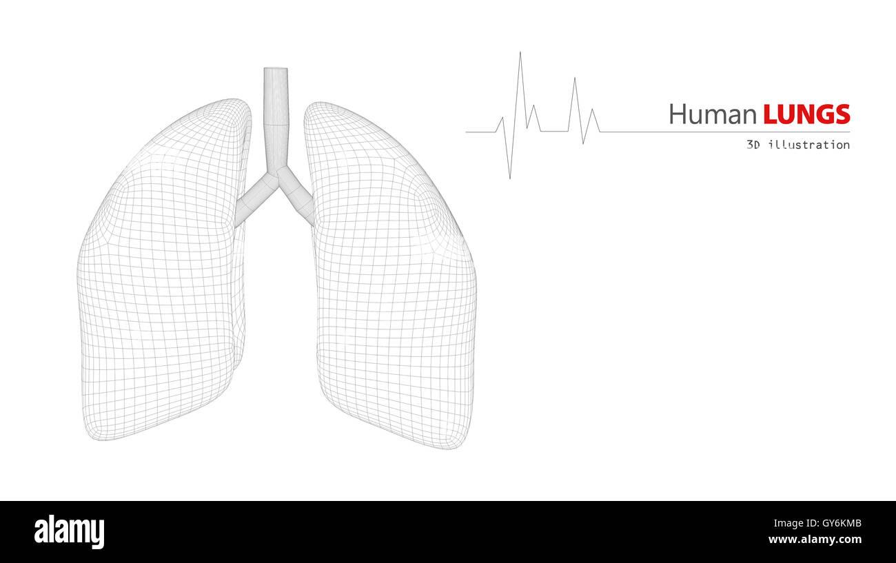 Anatomie der menschlichen Lunge Stockfoto, Bild: 120005099 - Alamy