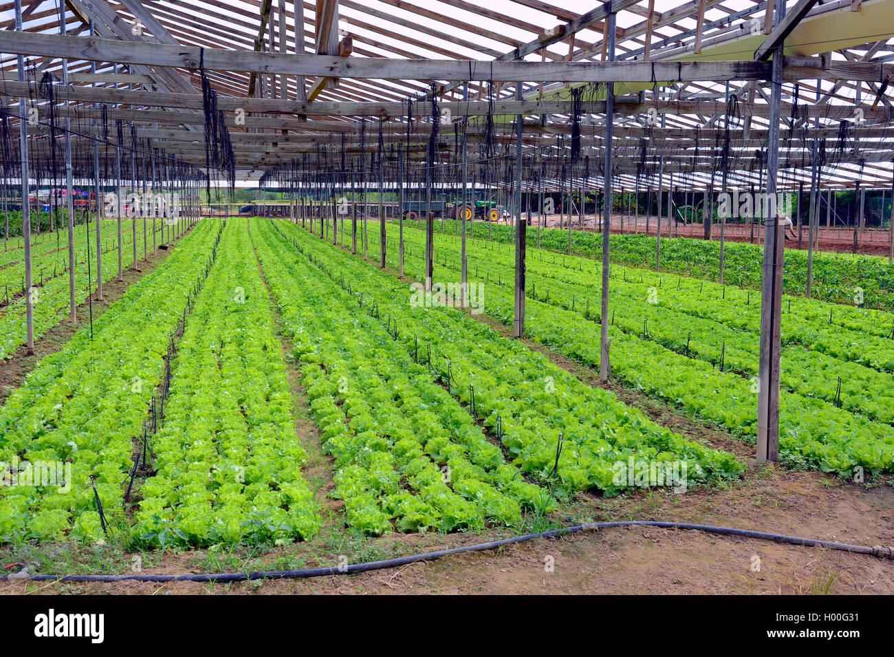 Gemueseanbau Auf der Insel Mahe, Seychellen, Mahe | Gemüseanbau auf Mahe, Seychellen, Mahe | BLWS419460.jpg Stockbild