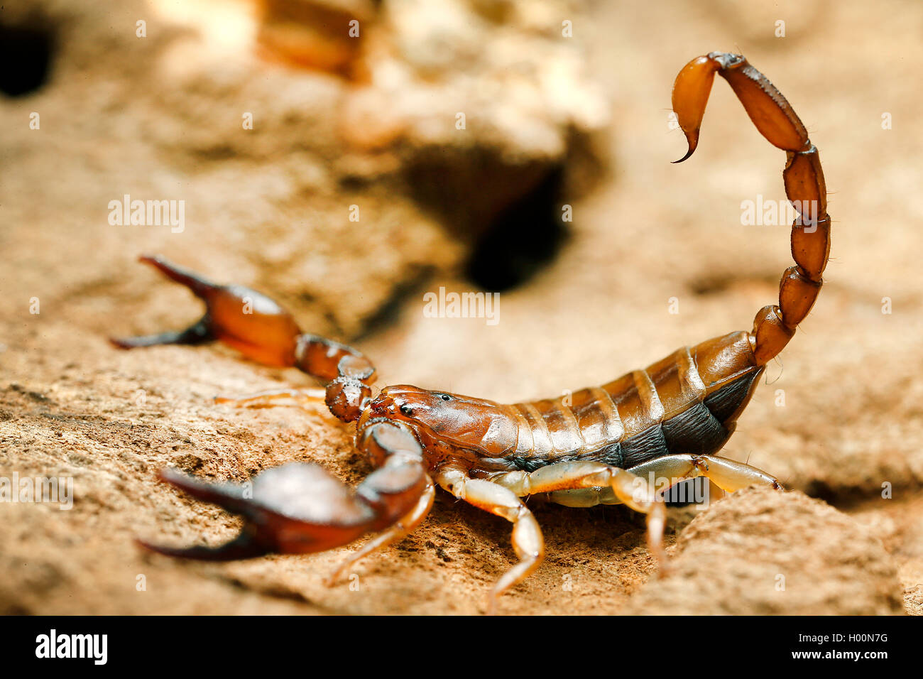 Skorpion Stein