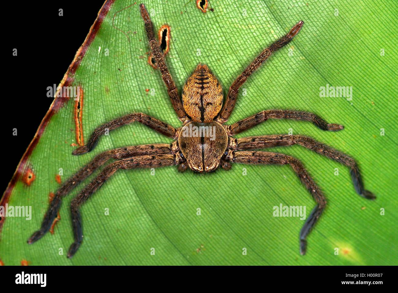 Nett Spinnen Malvorlagen Bilder - Malvorlagen Von Tieren - ngadi.info