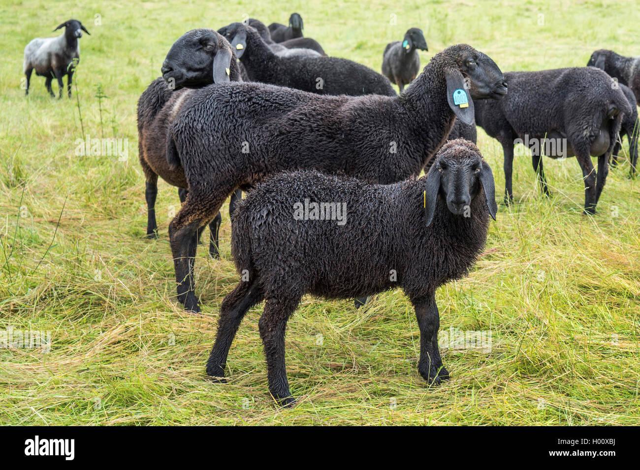 Schwarze Schafe