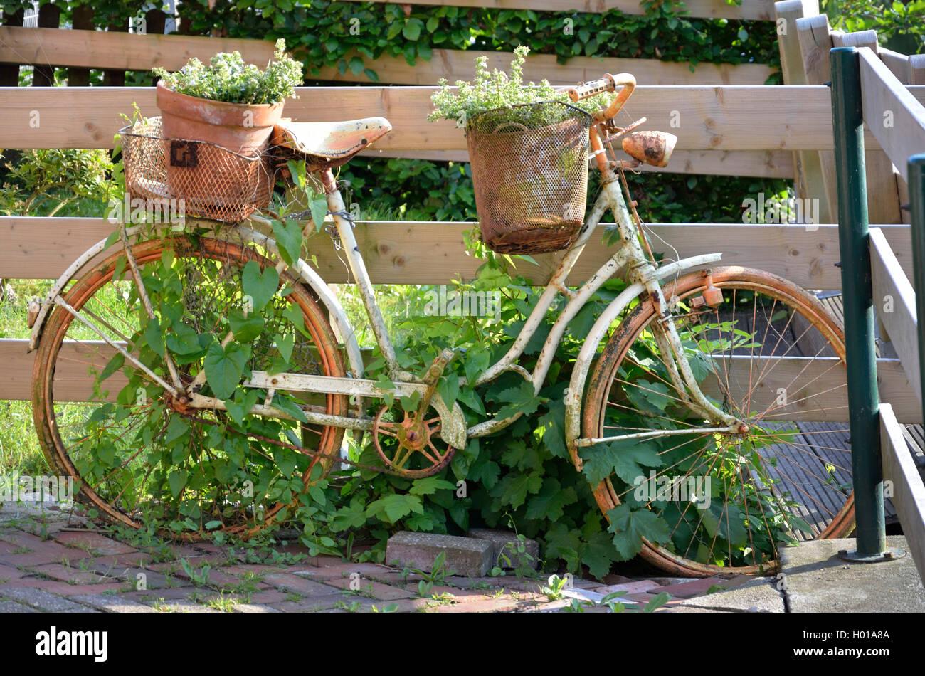 Shabby Chic, Bepflanztes Fahrrad Im Vintage-Look, Deutschland, Niedersachsen, Greetsiel | Shabby Chic, pflanzte Stockbild