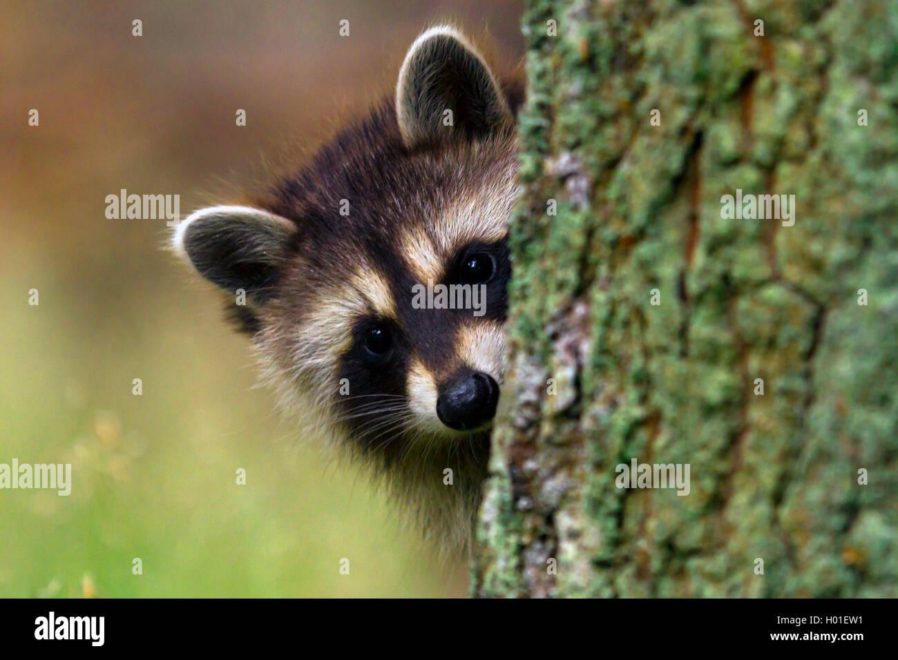 Hervorschauen Stockfotos & Hervorschauen Bilder - Alamy