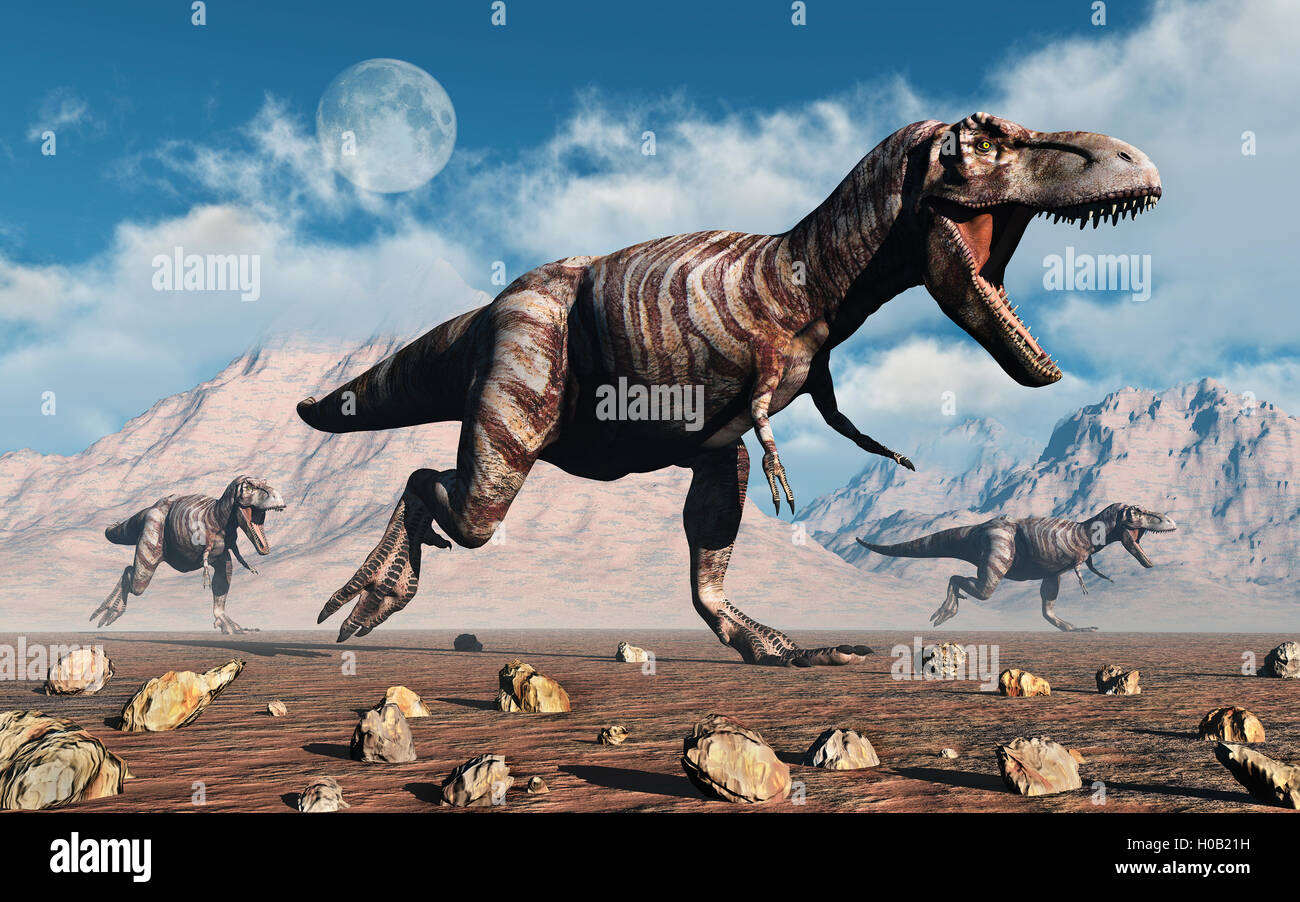 fleischfressende trex dinosaurier pack jagd stockfoto