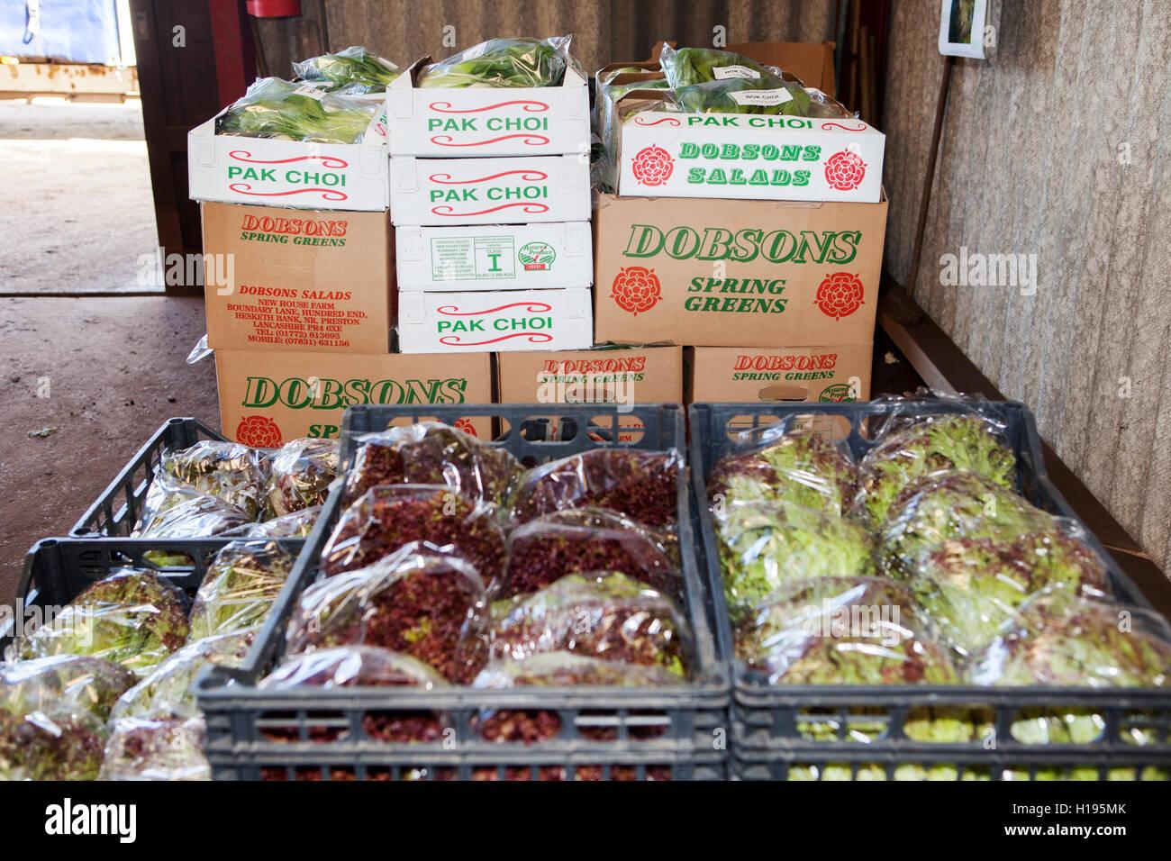 Salad Crops Stockfotos & Salad Crops Bilder - Alamy