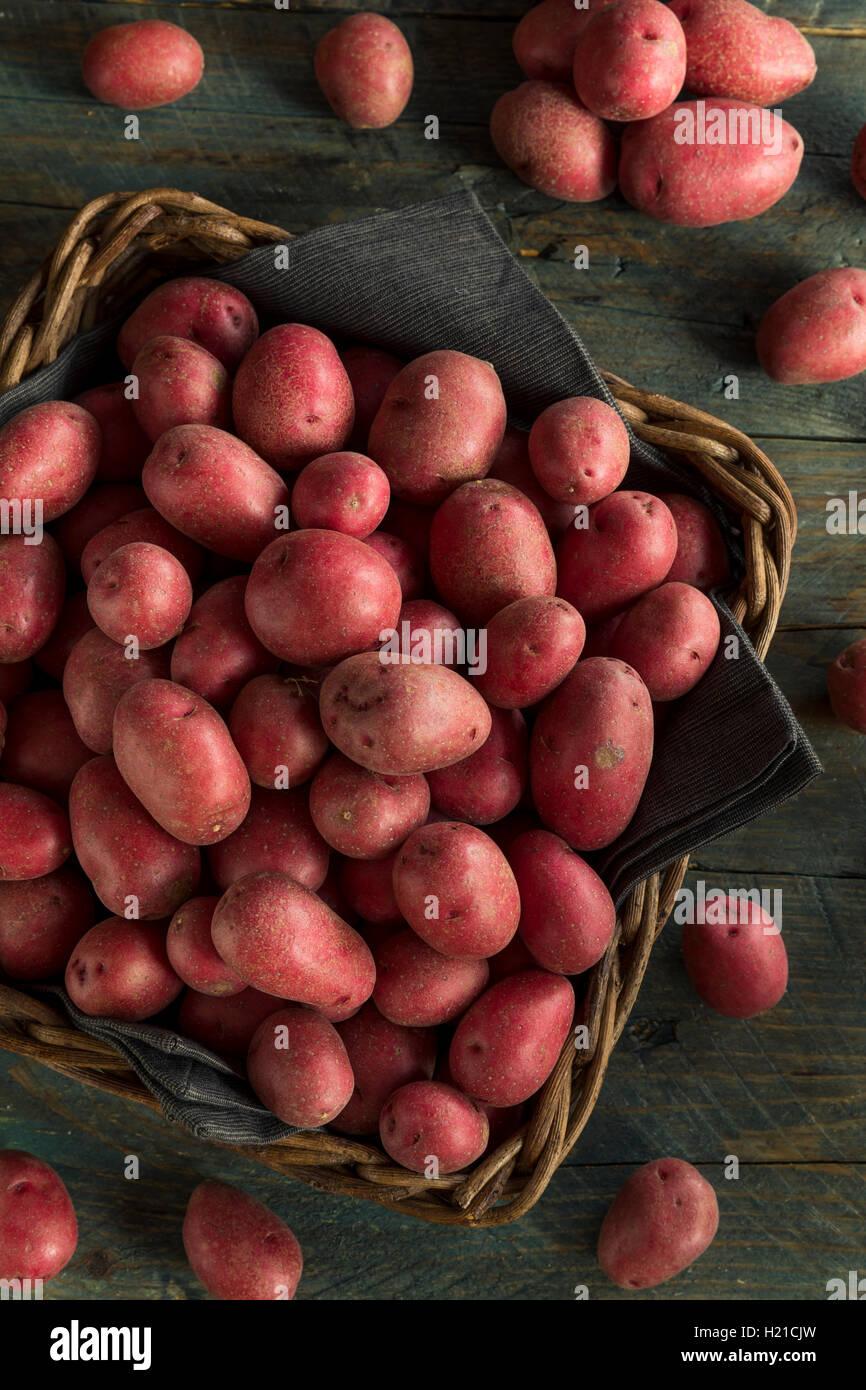 Rohe rote Biokartoffeln bereit zum Kochen Stockfoto