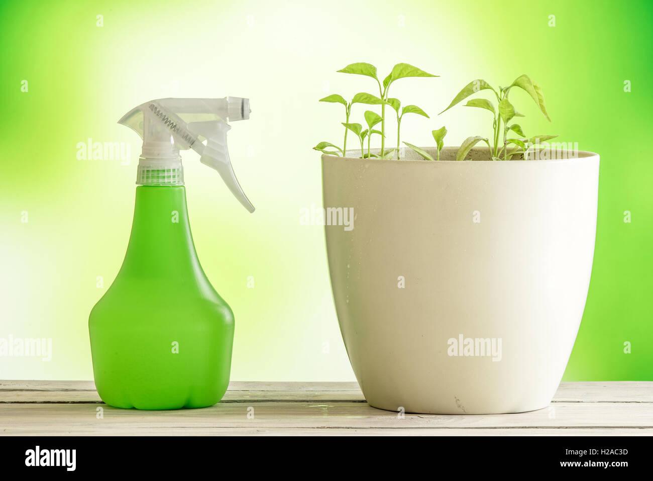 Bemerkenswert Grüne Pflanzen Foto Von Grüne Mit Einem Spray Können Auf Einem