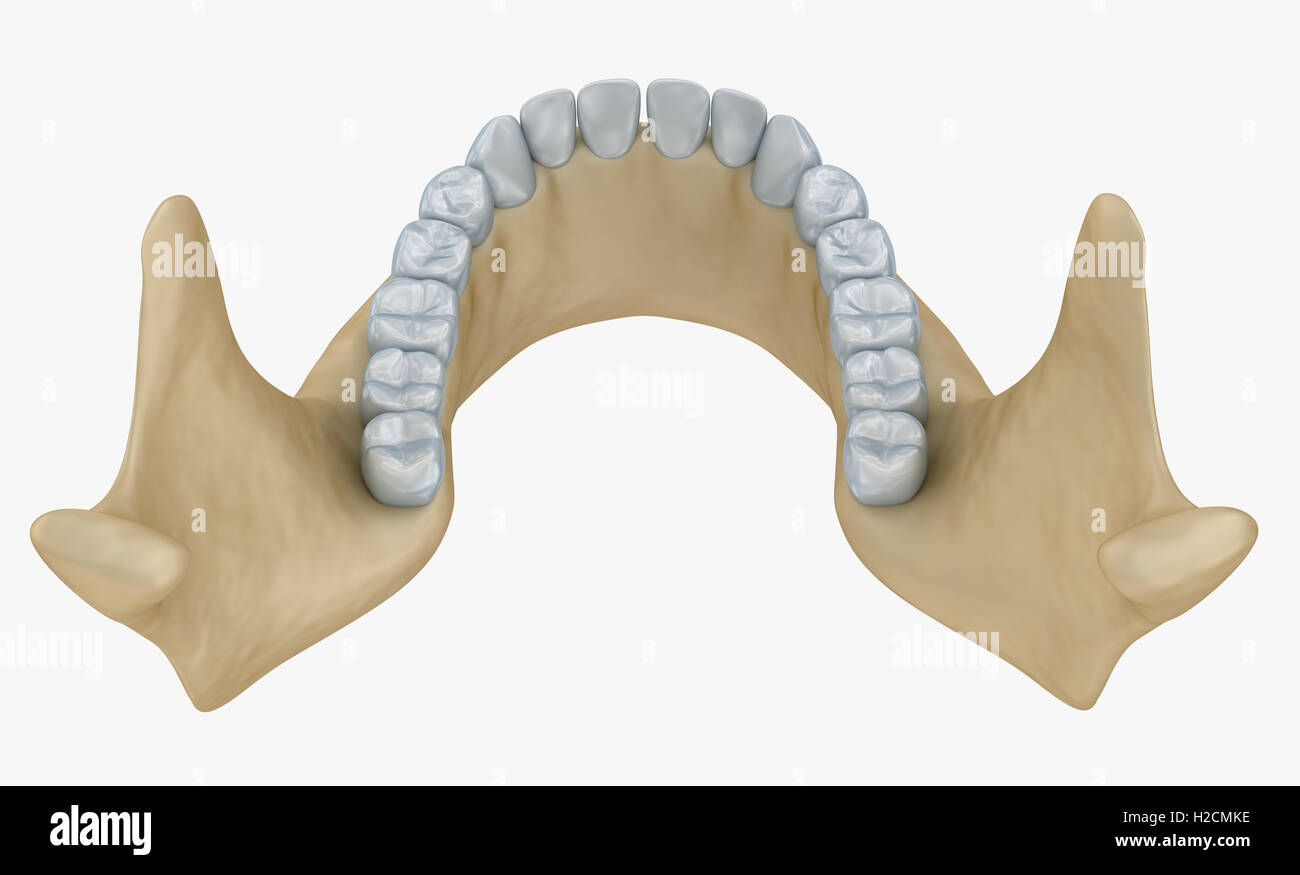 Lower Jaw Human Stockfotos & Lower Jaw Human Bilder - Seite 3 - Alamy