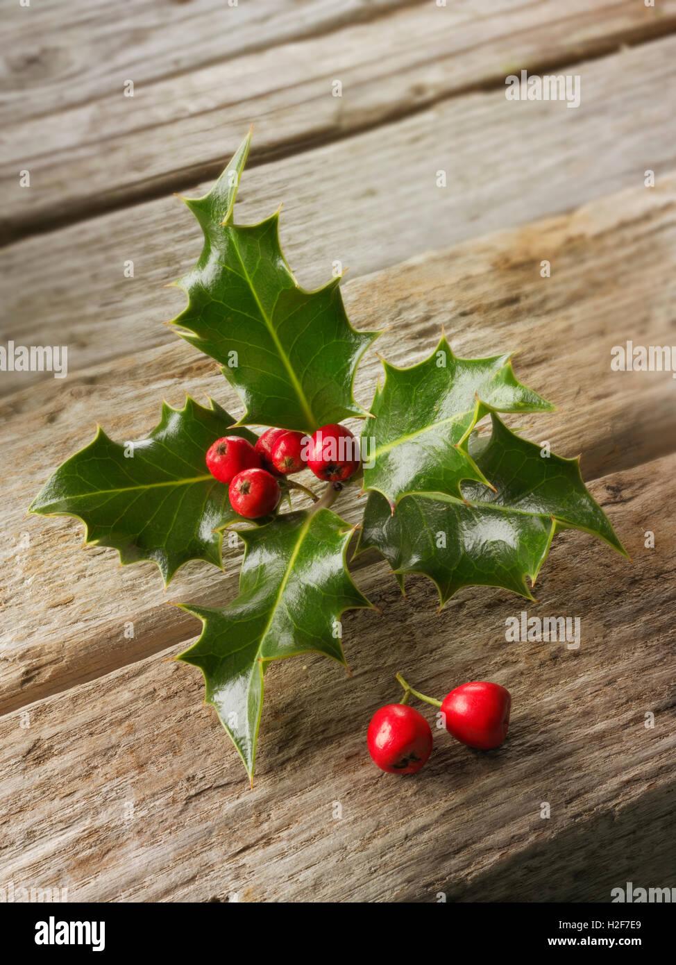Festliche saisonale Holly Blätter mit roten Beeren - Ilex aquifolium Stockbild