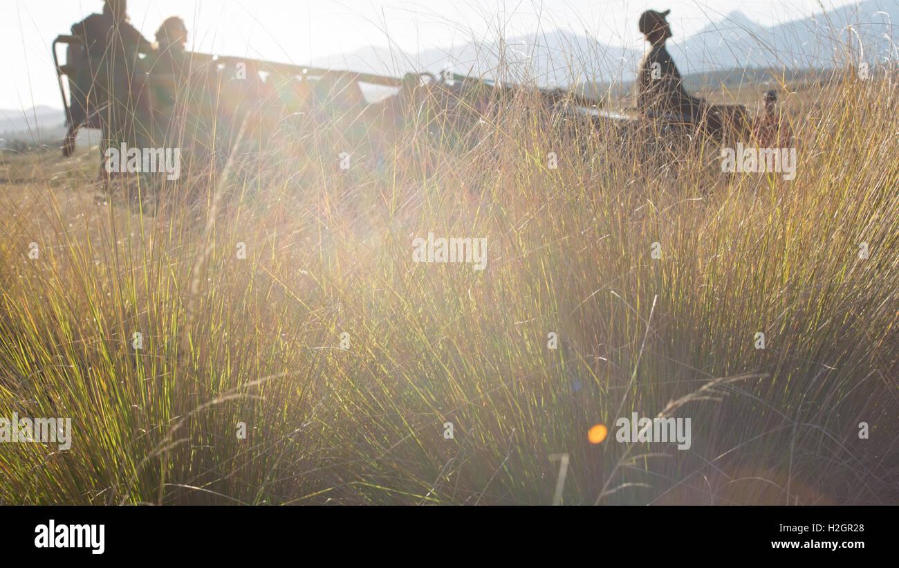 Silhouette Safari Auto unter hohe Gräser mit Blendenfleck Stockbild