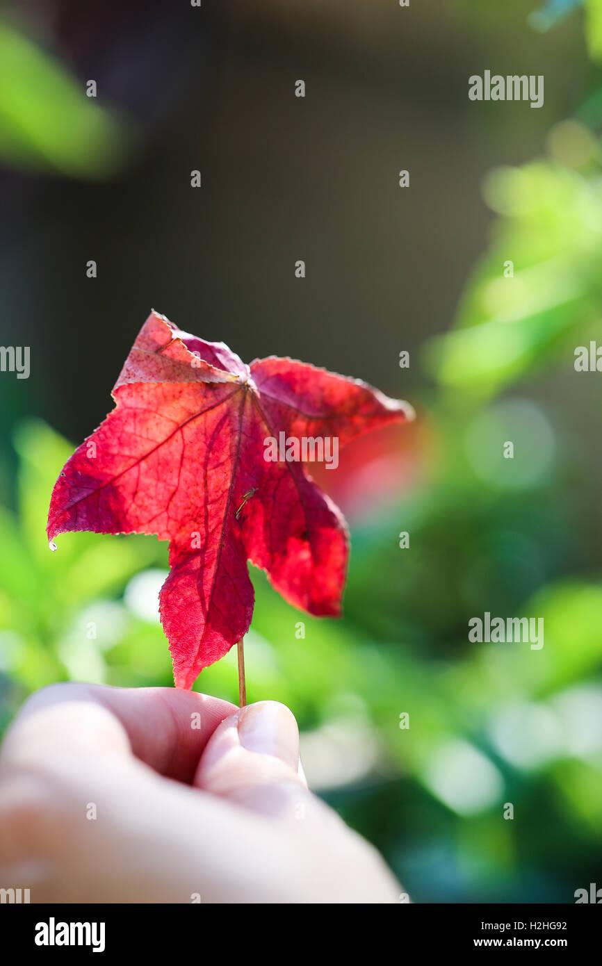 Blatt. Herbstliche inspiration Stockbild