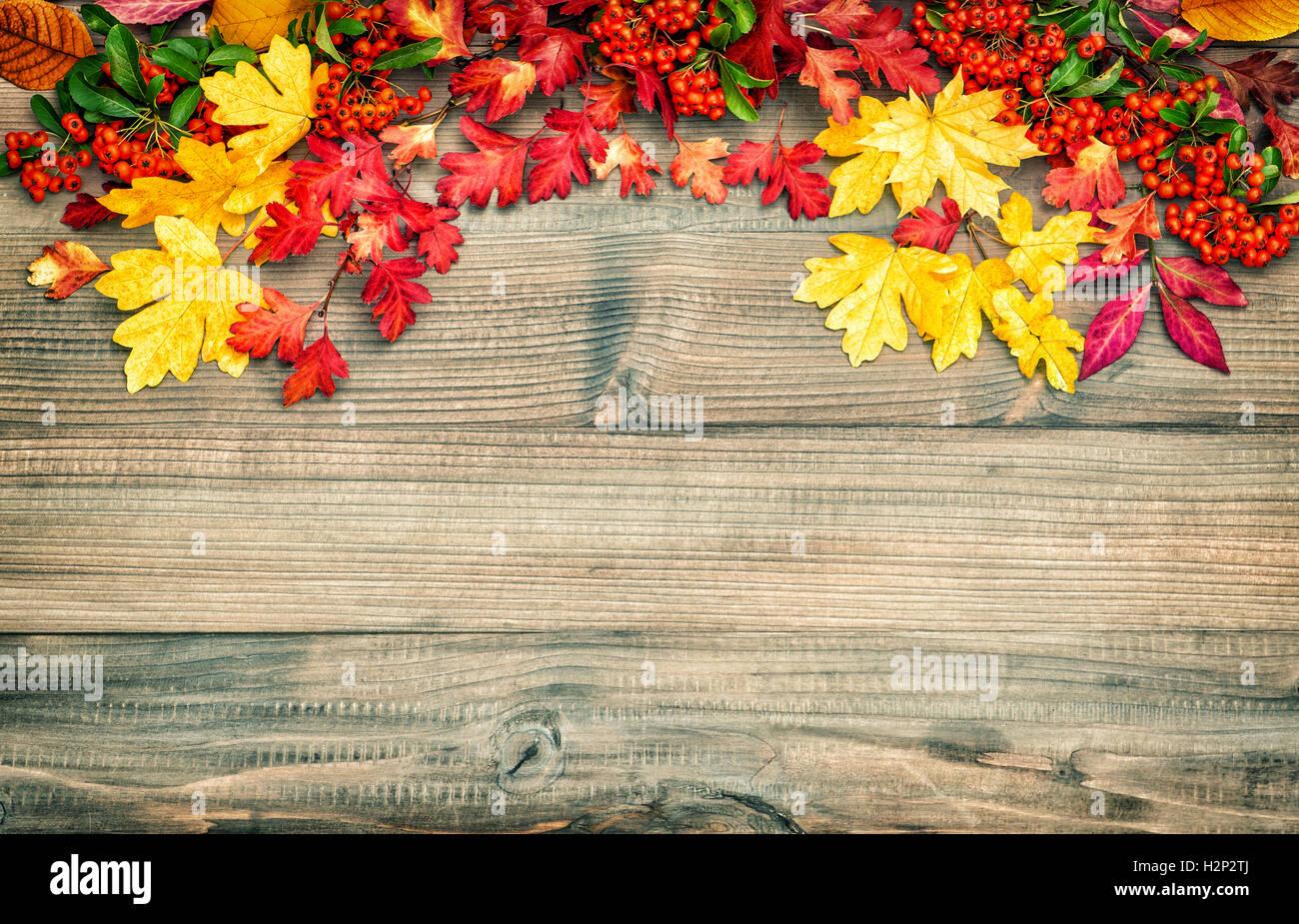 Rot Gelbe Blatter Und Beeren Herbst Hintergrund Vintage Stil