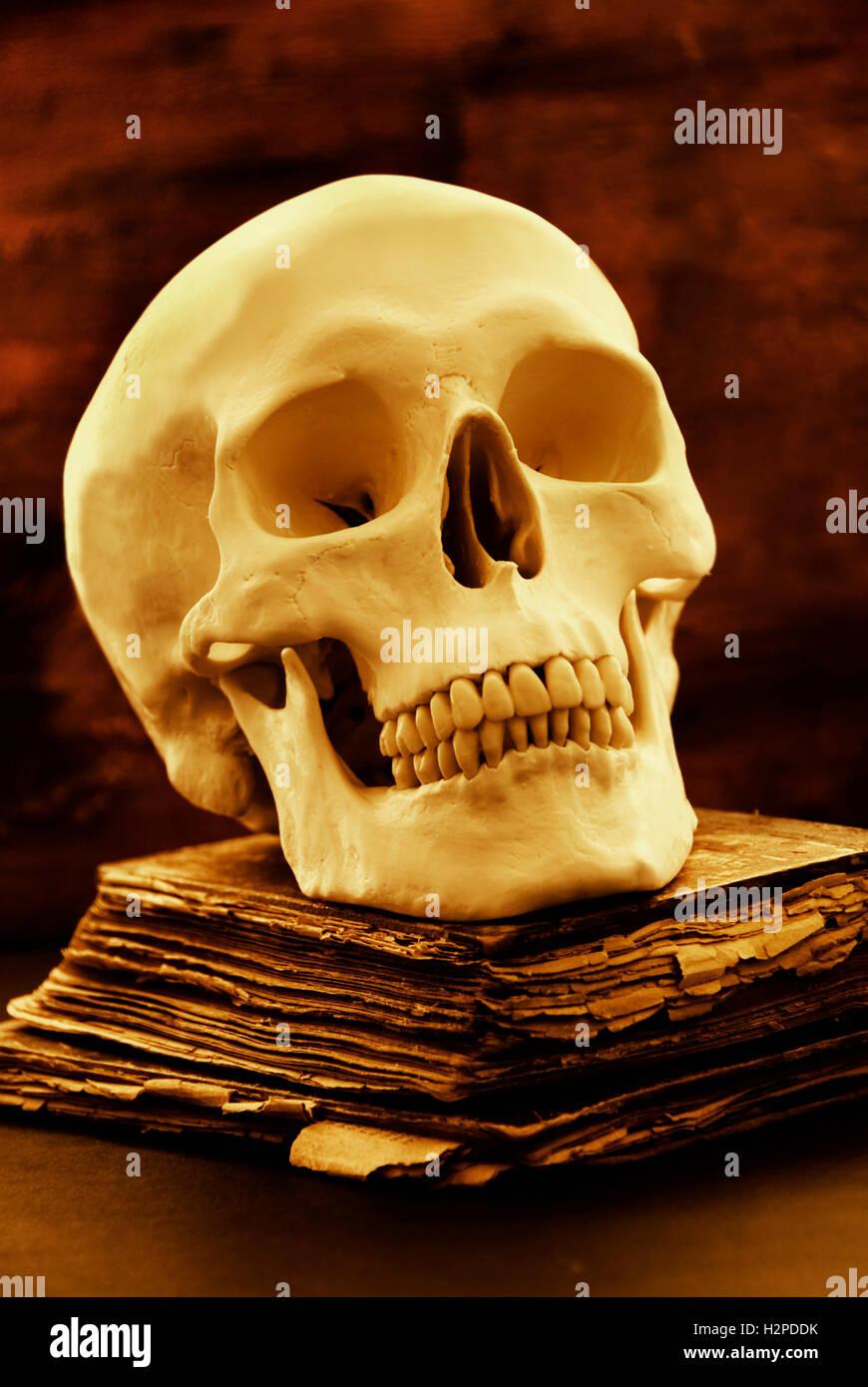 Menschlicher Schädel und altes Buch, Horror und Halloween Konzept Stockbild