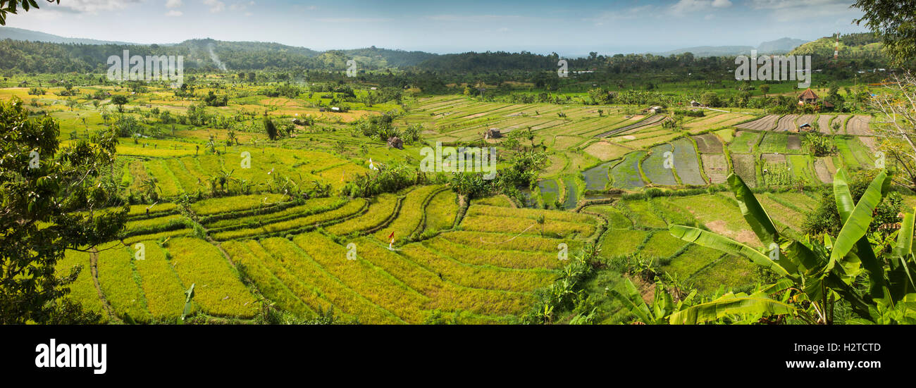 Indonesien, Bali, Tirta Gangga, Panoramablick auf der malerischen Reisterrassen nähert sich Ernte Stockbild