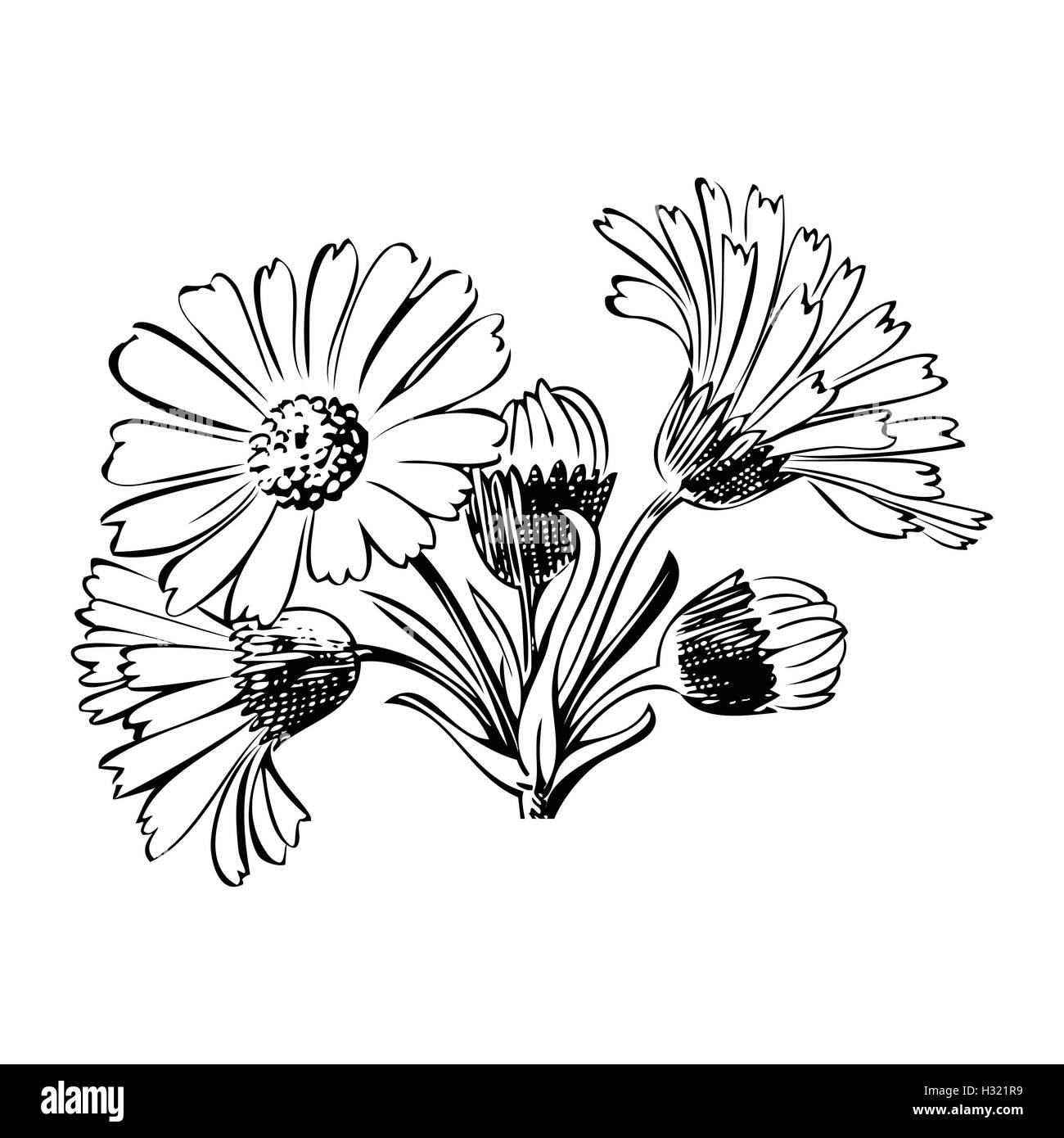 hand gezeichnet bouquet von daisy blumen auf wei em hintergrund farben schwarz und wei vector. Black Bedroom Furniture Sets. Home Design Ideas