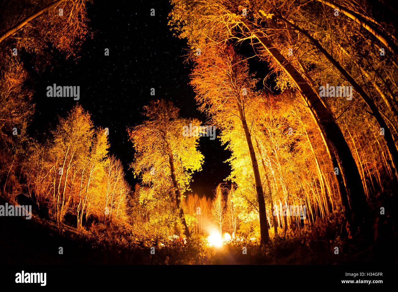 Lager im Wald mit großen Bäumen und Lagerfeuer in sternenklaren Nachthimmel Stockbild