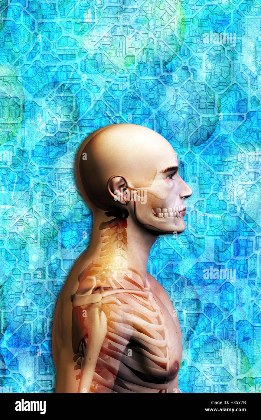 menschlichen Kopf und Oberkörper, mit Skelett überlagert Stockbild