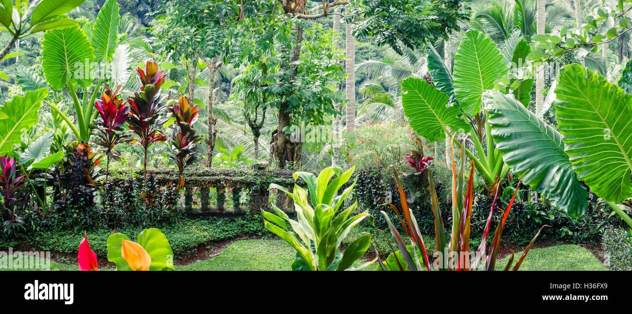 Emejing Tropische Pflanzen Im Garten Ideas - New Home Design 2018 ...