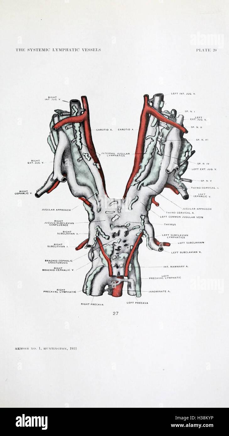 Berühmt Was Ist Die Systemische Anatomie Bilder - Menschliche ...