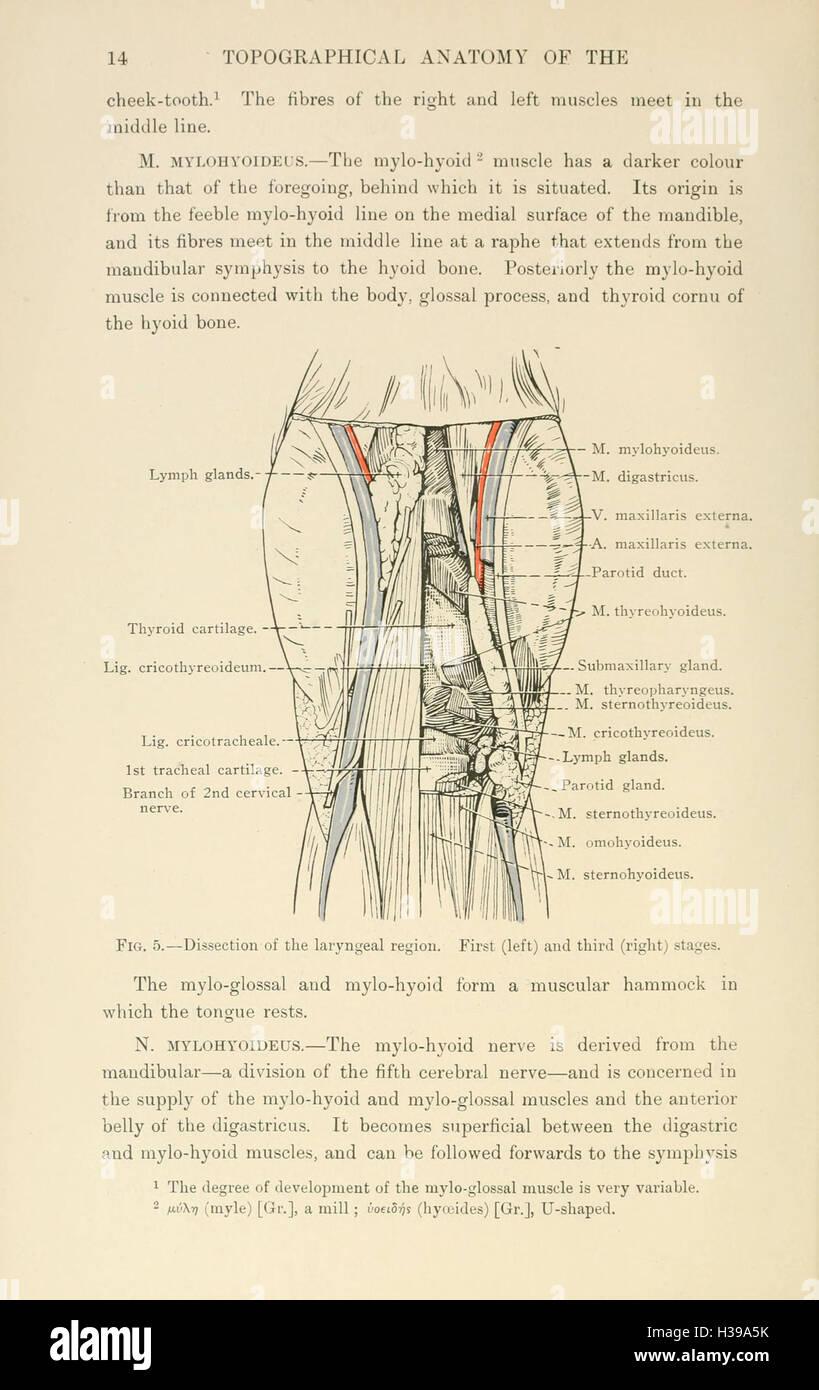 Erfreut Anatomie Des Kopf Und Halsbereich Galerie - Menschliche ...