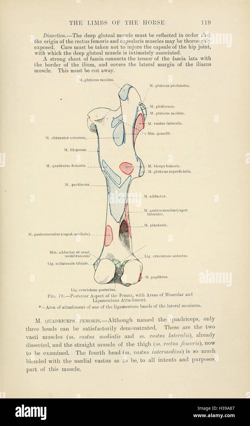 Großartig Pferde Fessel Anatomie Ideen - Anatomie Von Menschlichen ...