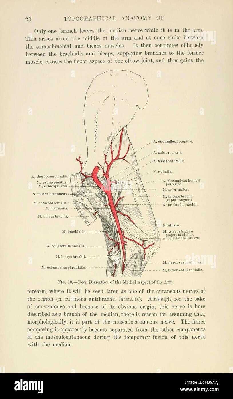 Wunderbar Anatomie Der Gliedmaßen Zeitgenössisch - Anatomie Ideen ...