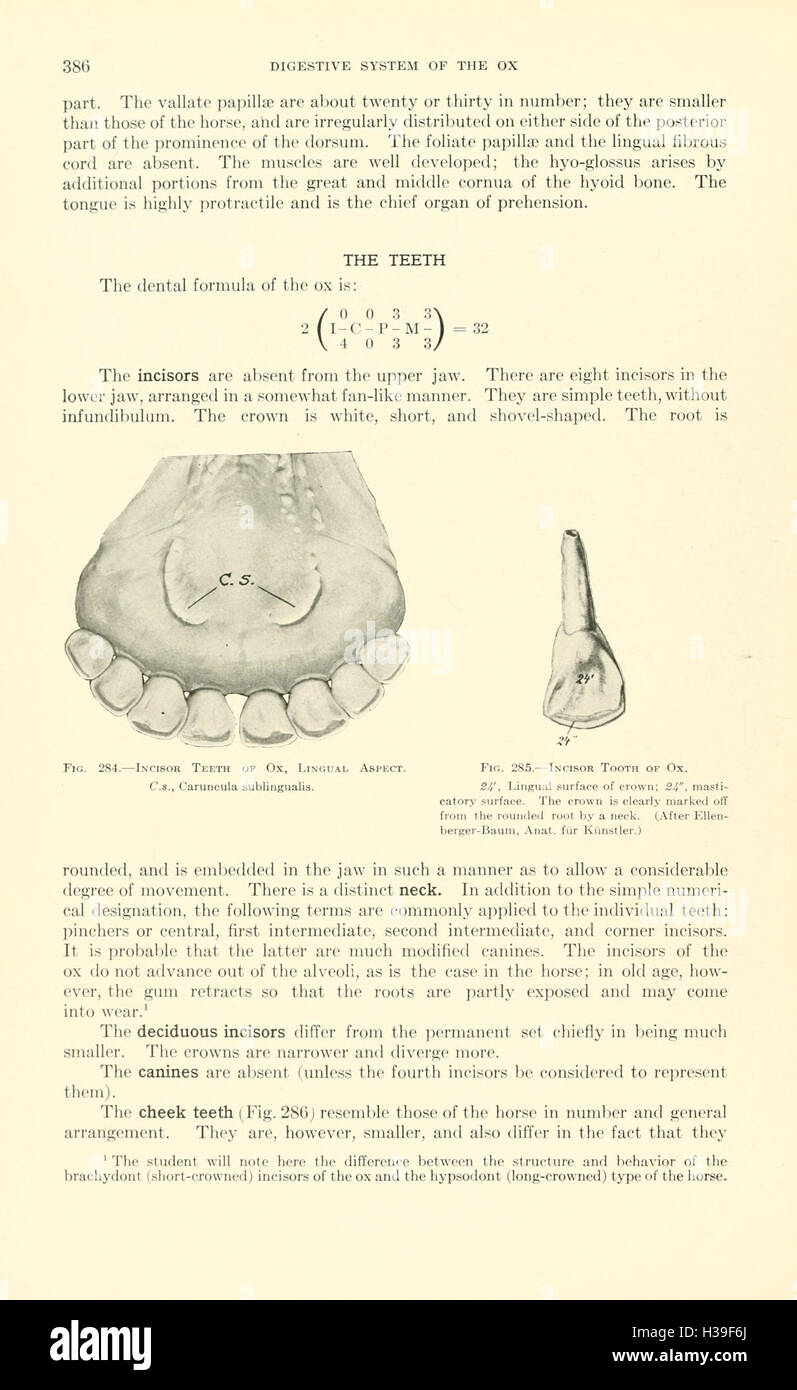 Berühmt Veterinär Anatomie Atlas Ideen - Menschliche Anatomie Bilder ...