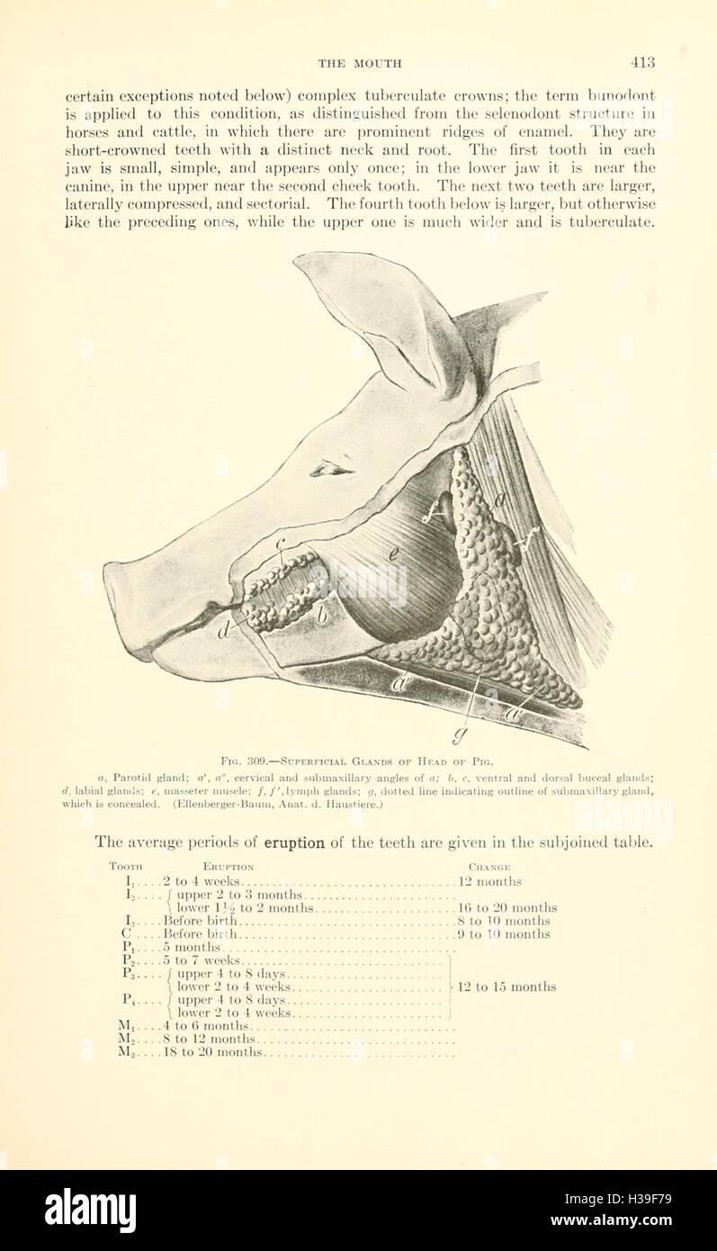 Draw Anatomy Stockfotos & Draw Anatomy Bilder - Seite 7 - Alamy