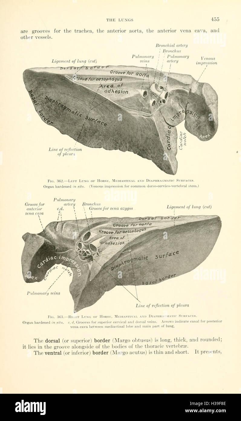 Ausgezeichnet Veterinär Anatomie Und Physiologie Bilder ...