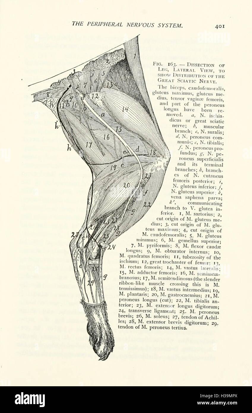Fein Anatomie Katze Dissektion Fotos - Anatomie Von Menschlichen ...
