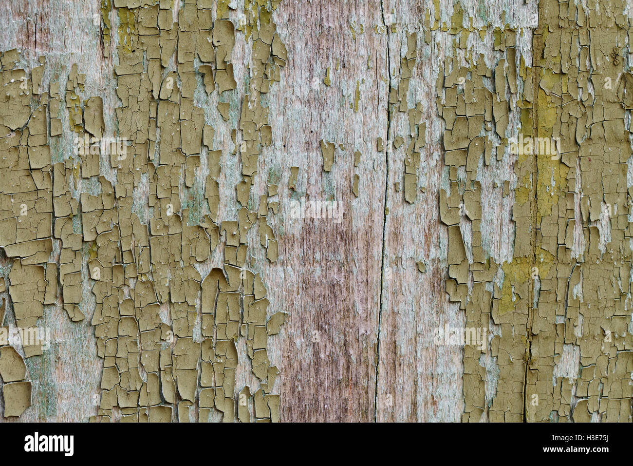 Grunge Holzstruktur, Grüne Farbe Alten Vintage Hintergrund Stockbild