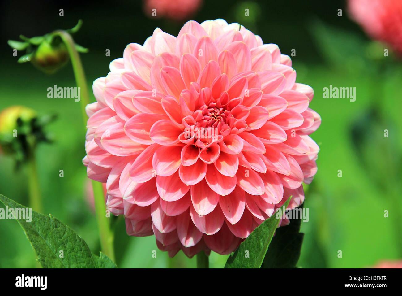 Tumblr Girl Stockfotos und -bilder Kaufen - Alamy