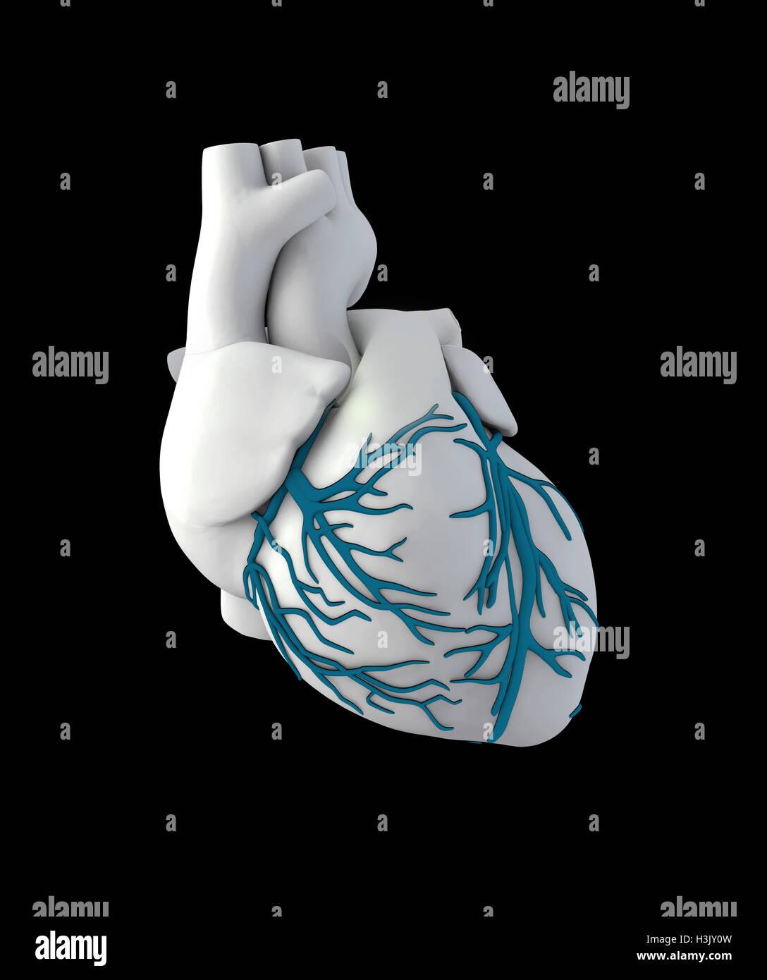 Großartig Knöcherne Anatomie Der Hand Bilder - Menschliche Anatomie ...