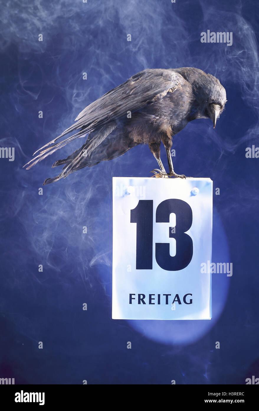 Aberglaube Unglück aberglaube kolkrabe kalender vögel freitag der 13 vogel rabe