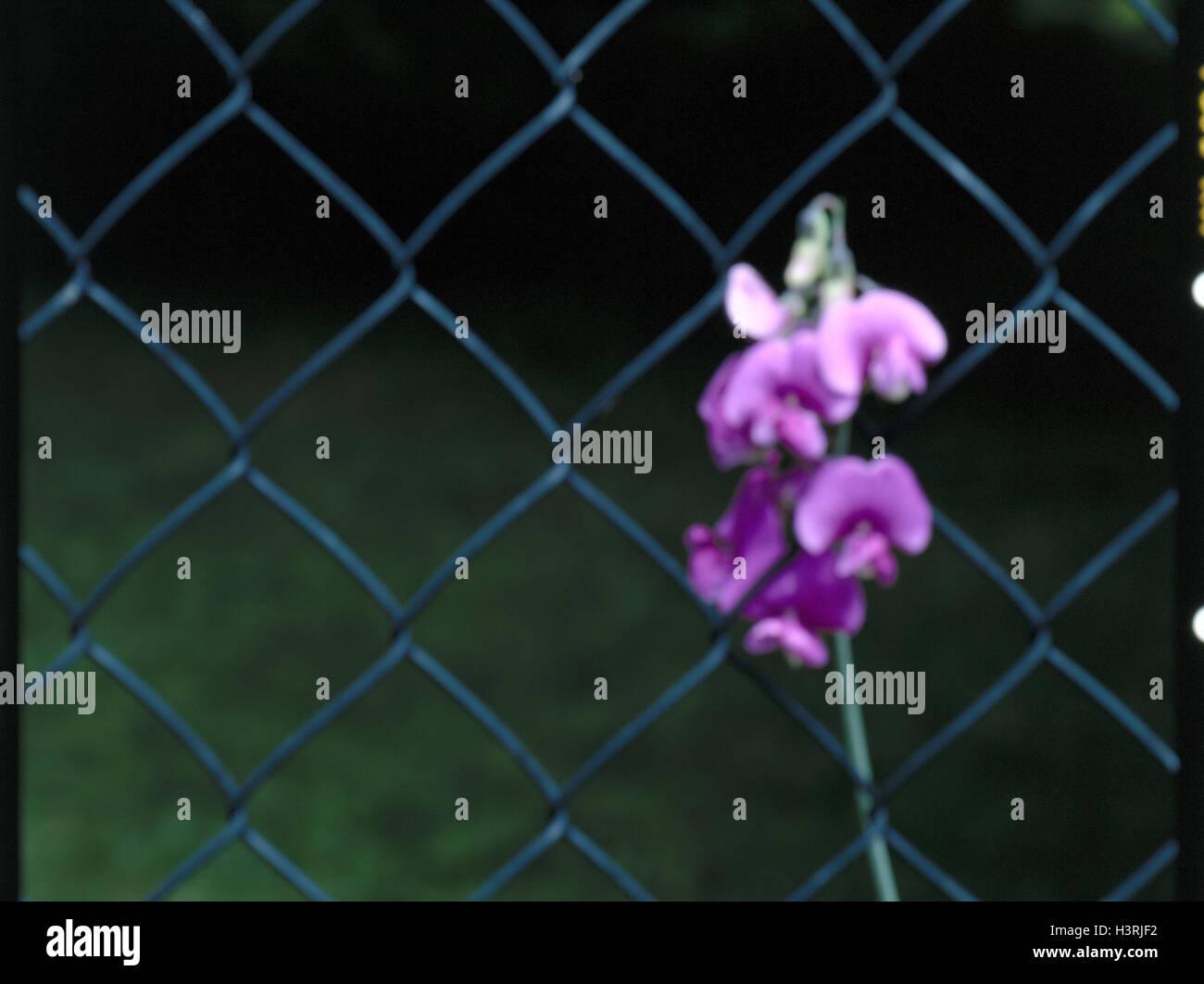 Zaun Wicke Stockfotos & Zaun Wicke Bilder - Alamy