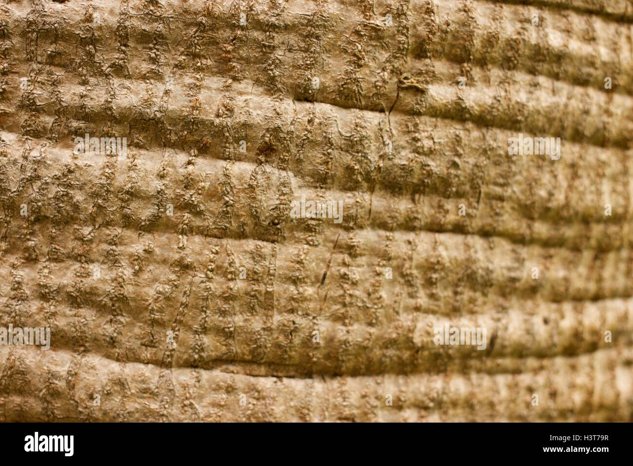 Teakbaum rinde  Detail einer Teakholz Baumstamm Textur Stockfoto, Bild: 122849155 ...