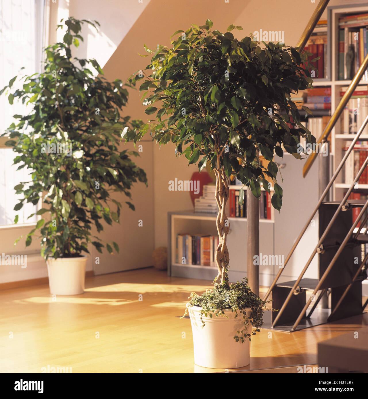 Wohnzimmer Pflanzen | Wohnzimmer Detail Grunpflanzen Birke Feigen Ficus Benjamina