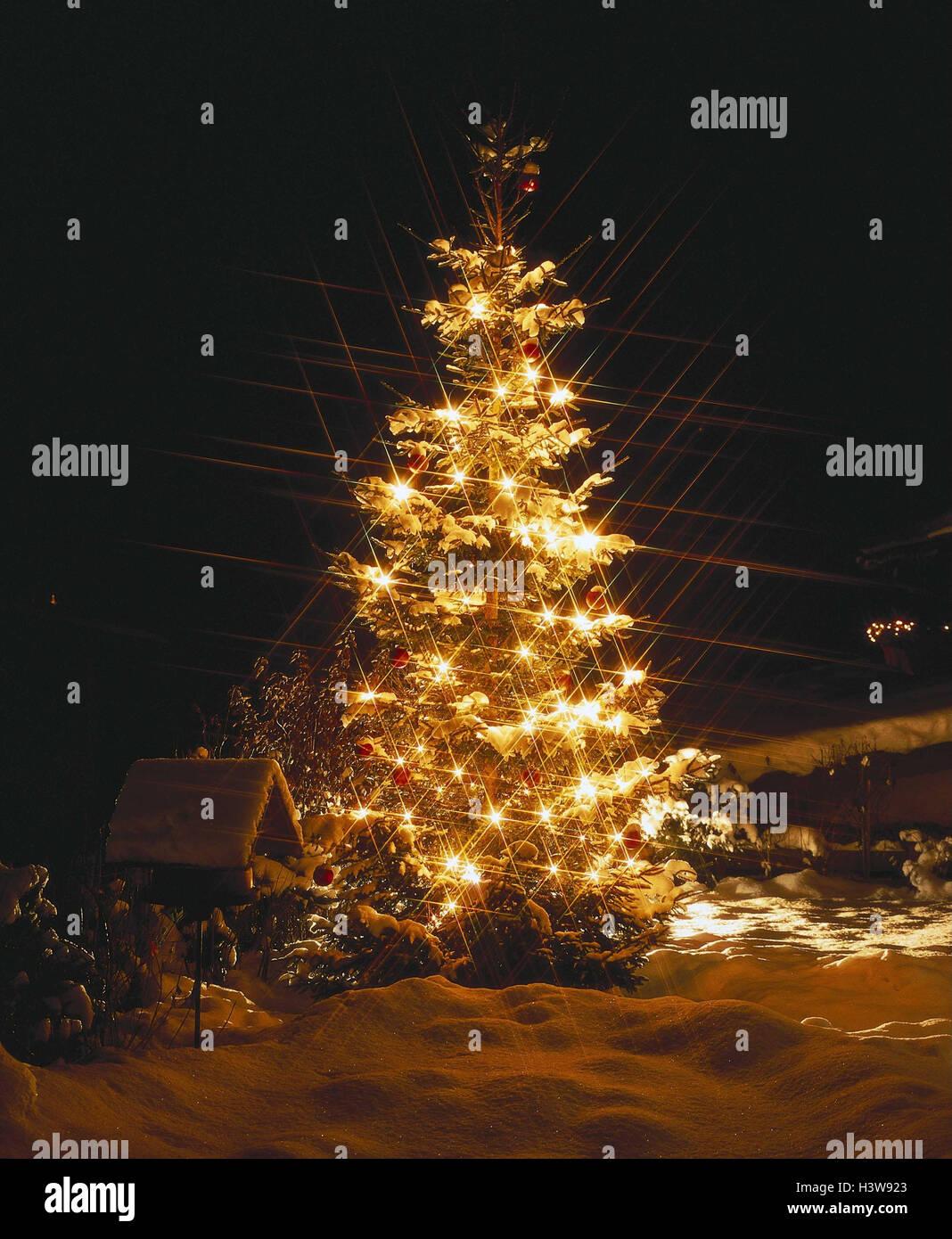 Winter, Weihnachten, Baum, Beleuchtung, Nacht, Winter, Weihnachten ...