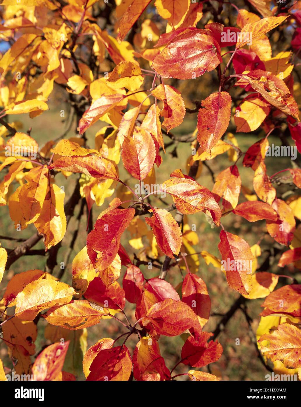 Ausgezeichnet Herbst Färbung Seite Zeitgenössisch - Beispiel ...
