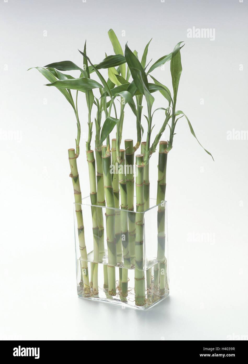 Vase Bambus Glas Glas Vase Bambus Bambusa Grass Typ Stamme