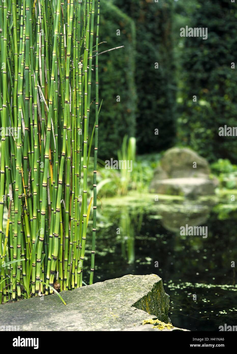 Japanischer Garten Teich Bambus Park Garten Garten Wasser Ufer