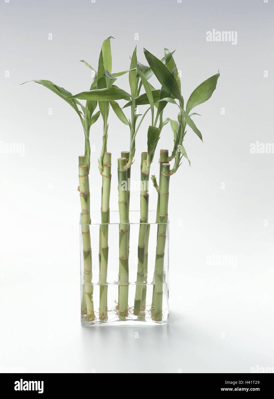 Vase Gluck Bambus Einfach Glas Glas Vase Dracaena Fragrans