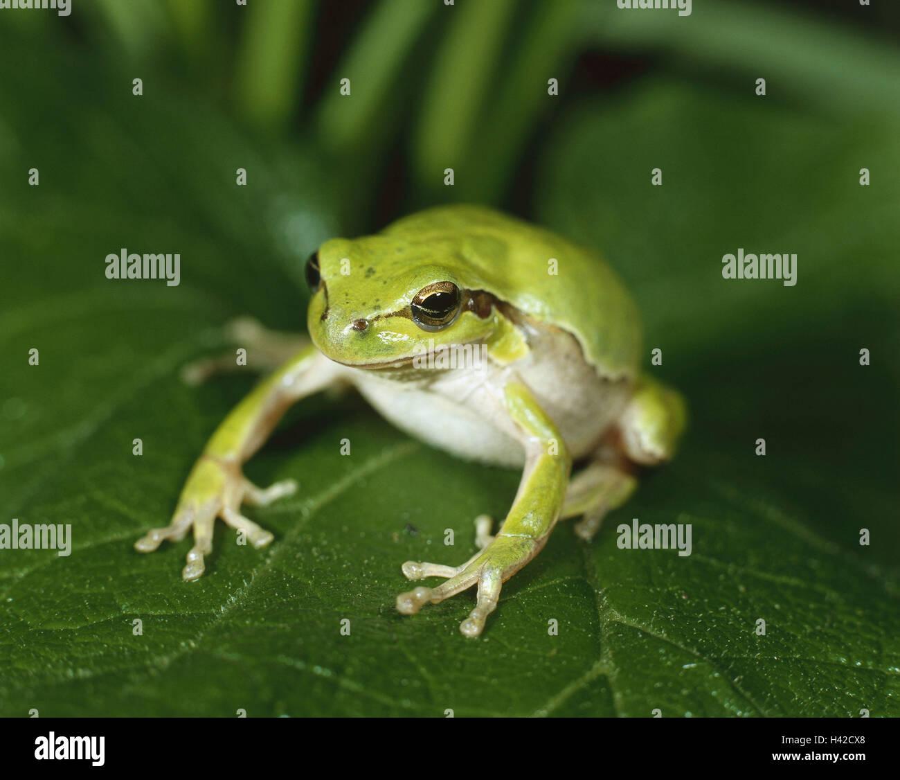 Charmant Frosch Färbung Fotos - Druckbare Malvorlagen - amaichi.info