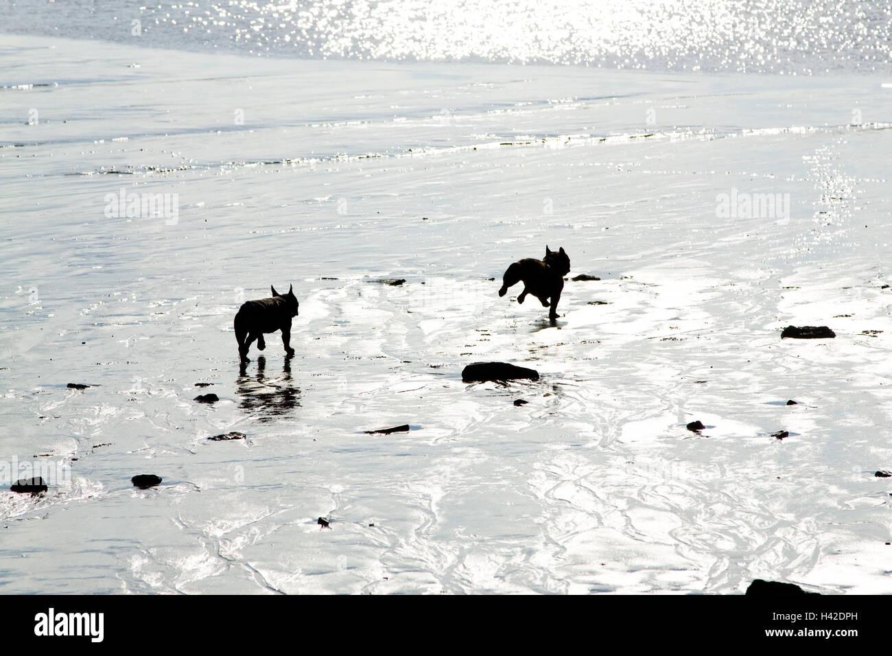 pedigree dogs stockfotos pedigree dogs bilder alamy. Black Bedroom Furniture Sets. Home Design Ideas