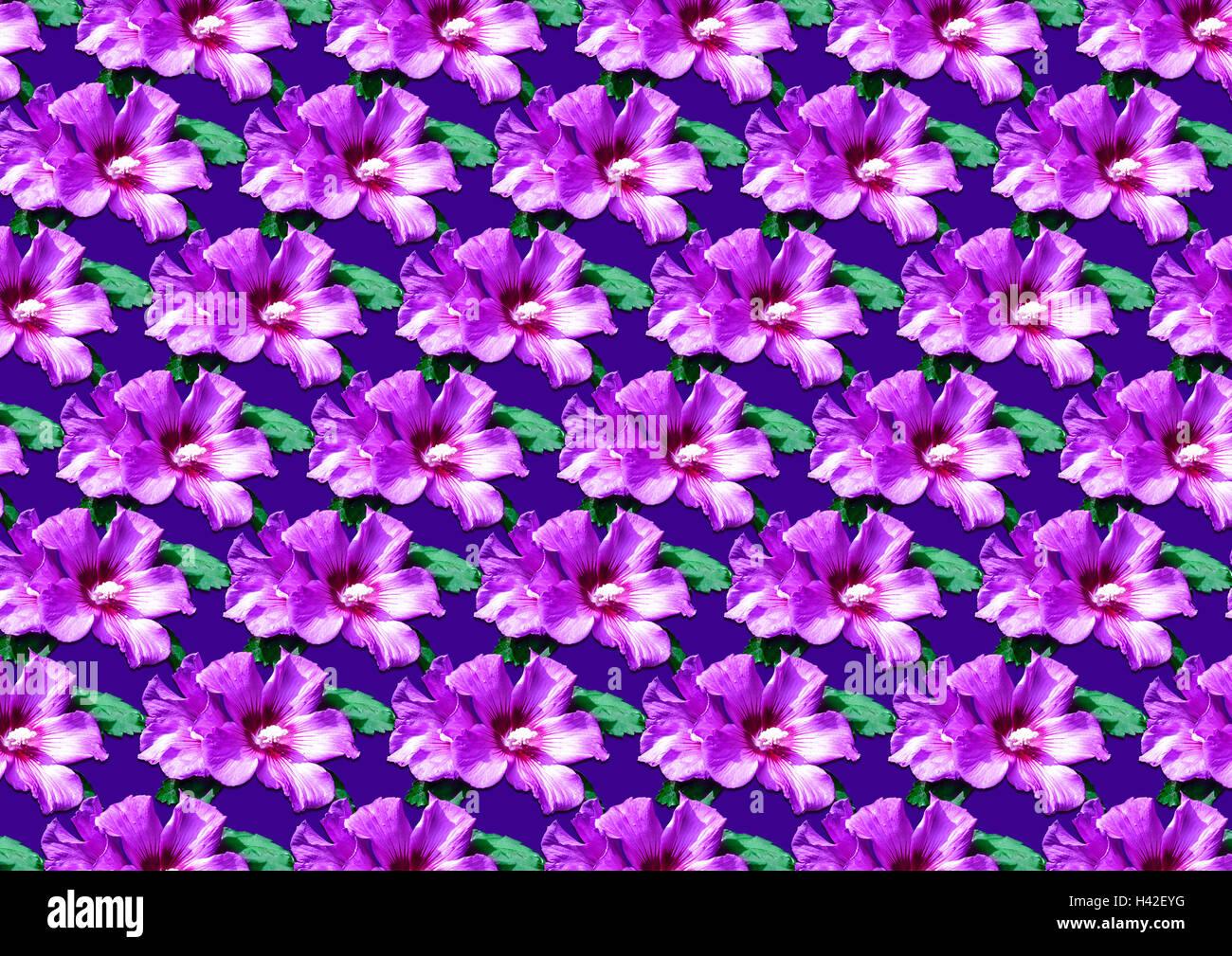 Purple Floral Fabric Background Stockfotos & Purple Floral Fabric ...