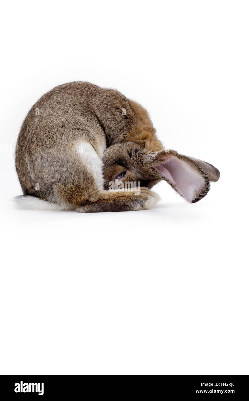 rabbit breeding stockfotos rabbit breeding bilder alamy. Black Bedroom Furniture Sets. Home Design Ideas