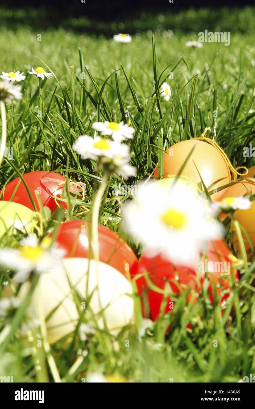 Wiese, Daisy, Ostereier, Unschärfe, Saison, Frühjahr, Frühling, Rasen, Blumen, Blüten, Blüten, Stockbild